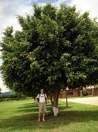 josh_with_tree.jpg