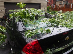 Tree branches broke this car's window on Millman.